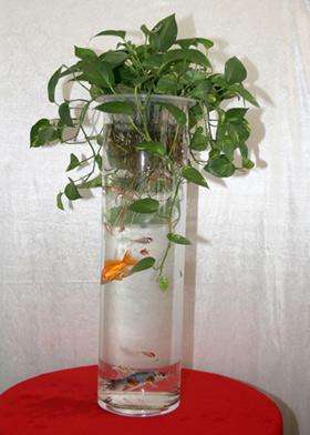 水养�:--y��yan������y��_美丽还好养活 居室保湿10大水养植物(组图)