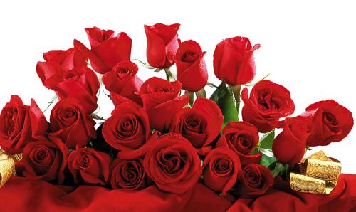 玫瑰花的养殖方法和注意事项 玫瑰花的功效与作用