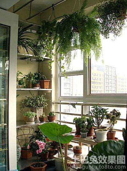 小户型阳台花架装修装修效果图图片
